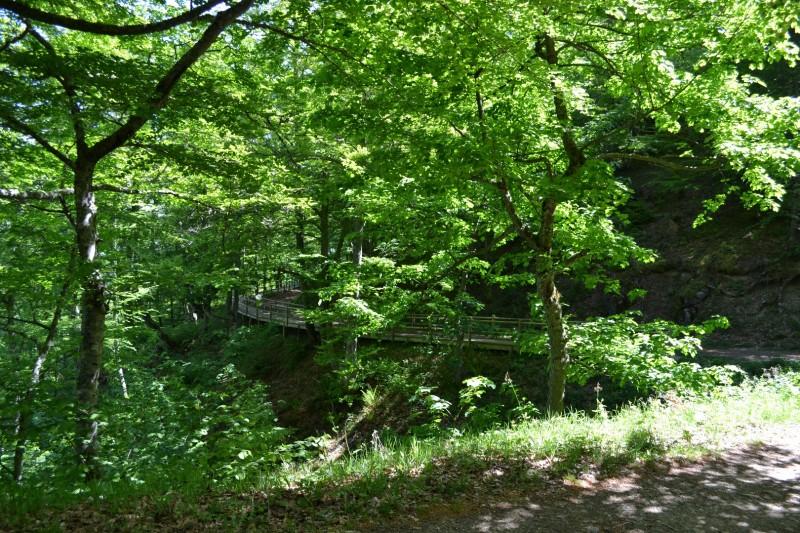 Ruta del Hayedo de Montegrande - Cascada del Xiblu